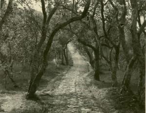 'Da Portofino a Ruta', aprile 1938